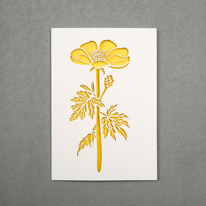 英国原产Chau Art毛茛 主题贺卡明信片创意贺卡